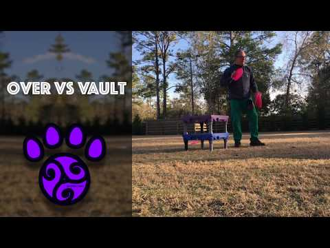 Disc Dog Freestyle Over vs Vault Training