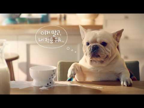 [퀸앤퍼피] 서울우유 아이펫밀크 180ml (균형 잡힌 영양 및 수분 공급을 위한 반려동물 전용우유)