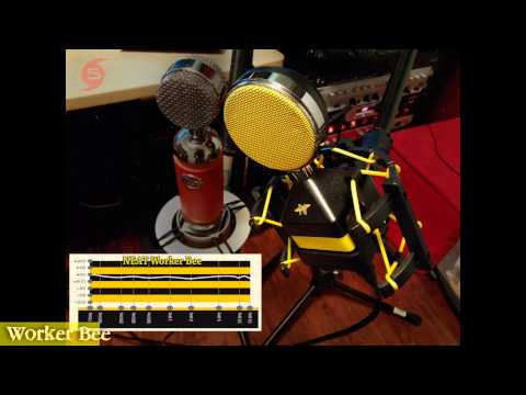 Mic Shootout: NEAT Worker Bee vs BLUE Spark on Acoustic Guitar