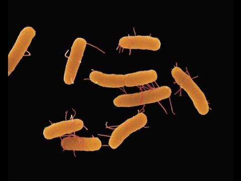 بكتيريا السالمونيلا | Salmonella