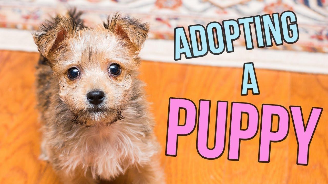 Adopting a PUPPY!