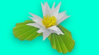 DIY lily flower making with paper /Most Beautiful water lily lotus flowers