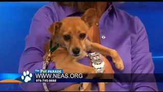 Pet Parade  Northeast Animal Shelter « CBS Boston