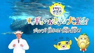映画は2015年10月10日公開 魚類学者でタレントのさかなクンが、助手のキ...