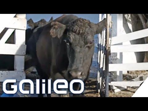 Ist Argentinisches Steak Wirklich Das Beste Fleisch Der Welt? | Galileo | ProSieben