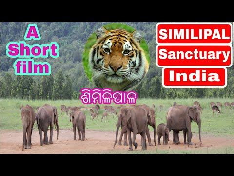 Similipal tiger reserve video HD || Documentary film Simlipal abhayaranya,Mayurbhanj,Odisha,India
