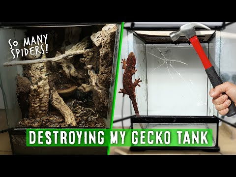 Emptying My Bioactive Gecko Tank & Removing The Clean Up Crew 🥺🕷