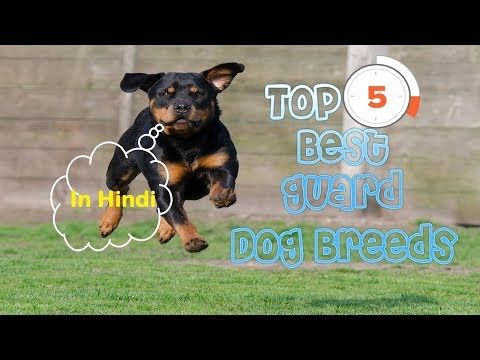 top-5-guard-dog-breeds-in-india-for-middle-class-|dog-facts-in-hindi-|-animal-channel-hindi
