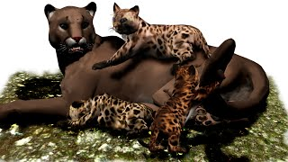 Cougars: Untamed & On The Prowl