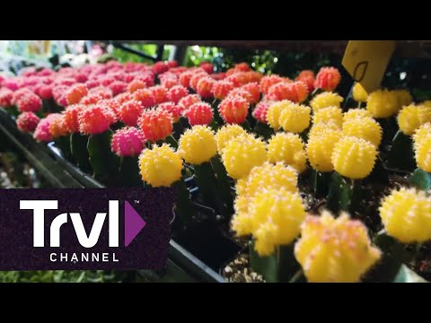 Midtown on the Cheap - Travel Channel