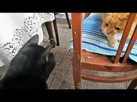 When Cat Gets Jealous