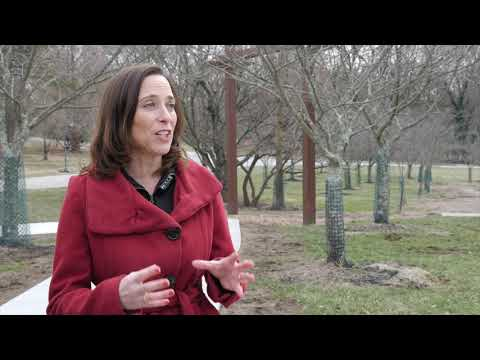 The Ault Park Weeping Cherry Trees Need YOU!