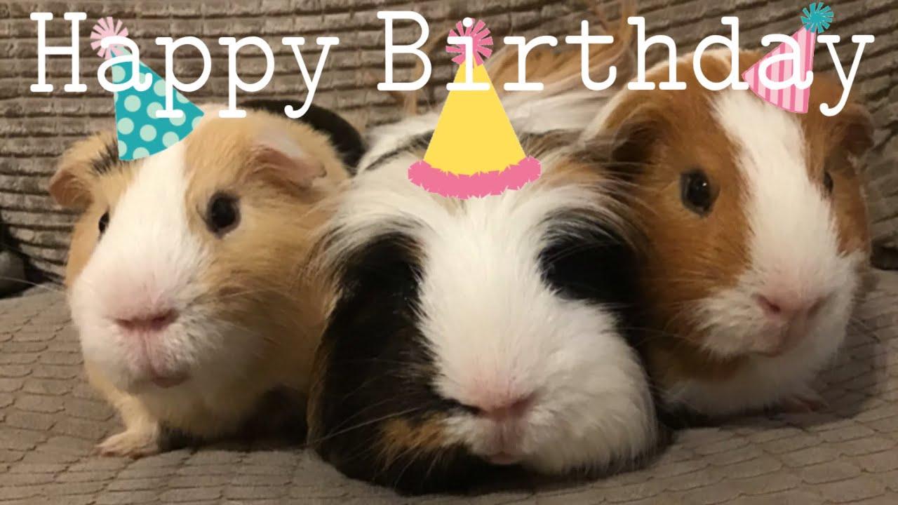 Happy Birthday Pigs Youtube