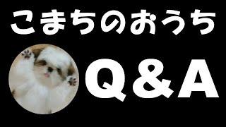 こまちのおうちQ&A【シーズー 犬 / 子犬 / shih tzu dog / puppy】