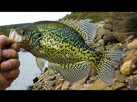 Crappie Fishing In Oregon