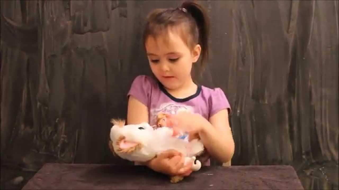 Animal Babies Nursery Baby Persian Kitten Plush Youtube