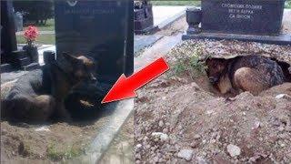 Chú chó đào ổ trong ngôi mộ lạ, điều bên trong khiến mọi người bất ngờ…