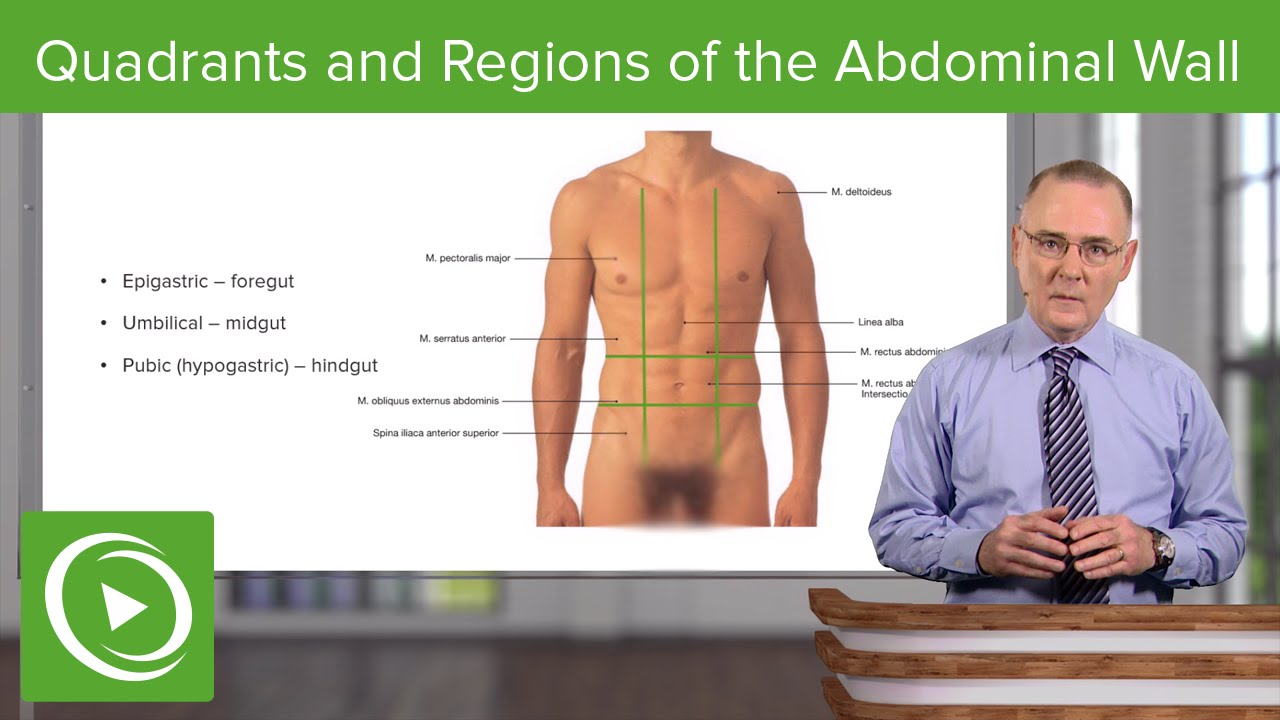 Quadrants and Regions of the Abdominal Wall – Anatomy | Lecturio