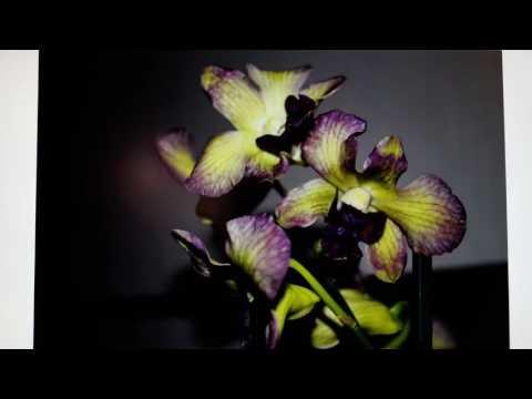 Фотографии цветущих орхидей