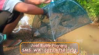 Download Video Panen Ikan Seluang (Cipeng / Wader Pari) dengan Bubu Payung | Perangkap Ikan dan Udang 12 Lubang MP3 3GP MP4