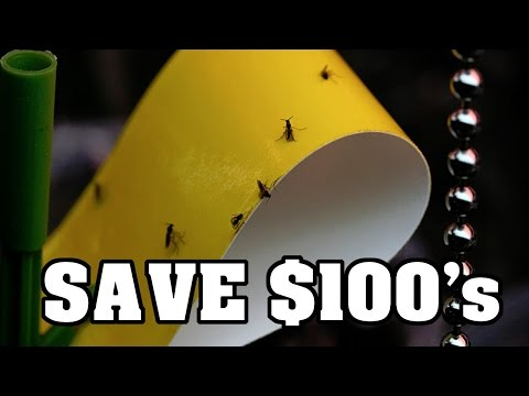 HOW TO Make Sticky Fly Trap - SAVE MONEY Do It Yourself