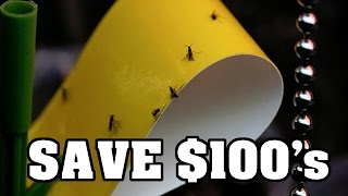 Save Money DIY How to make Yellow Sticky Traps