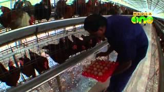 Njatuvela  Agricultural awareness - Poultry farming | കോഴി വളര്ത്തല് (Part 2, Episode 10)