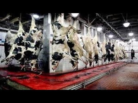 Amazing meat processing factory. The Power of Modern Technology !
