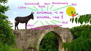 Latein Vokaben Eselsbrücken 16
