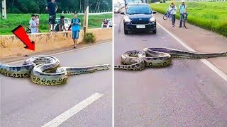 Бывает и Такое!  10 Случаев Жести со Змеями Снятых на Камеру
