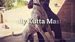 Bully Kutta Mastiff 9lakhiya, King Pappu, Lahori, mastoo, moti302, power