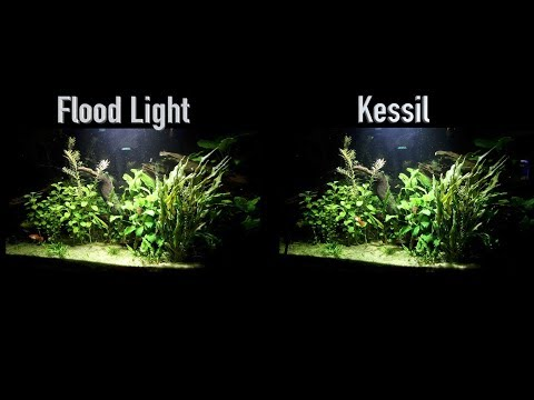 Kessil VS Flood Light