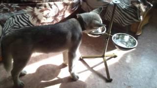 Кормушка для собак с регулировкой по высоте