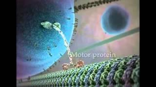 Жизнь на клеточном уровне