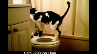 My Cat Peeing in the toilet