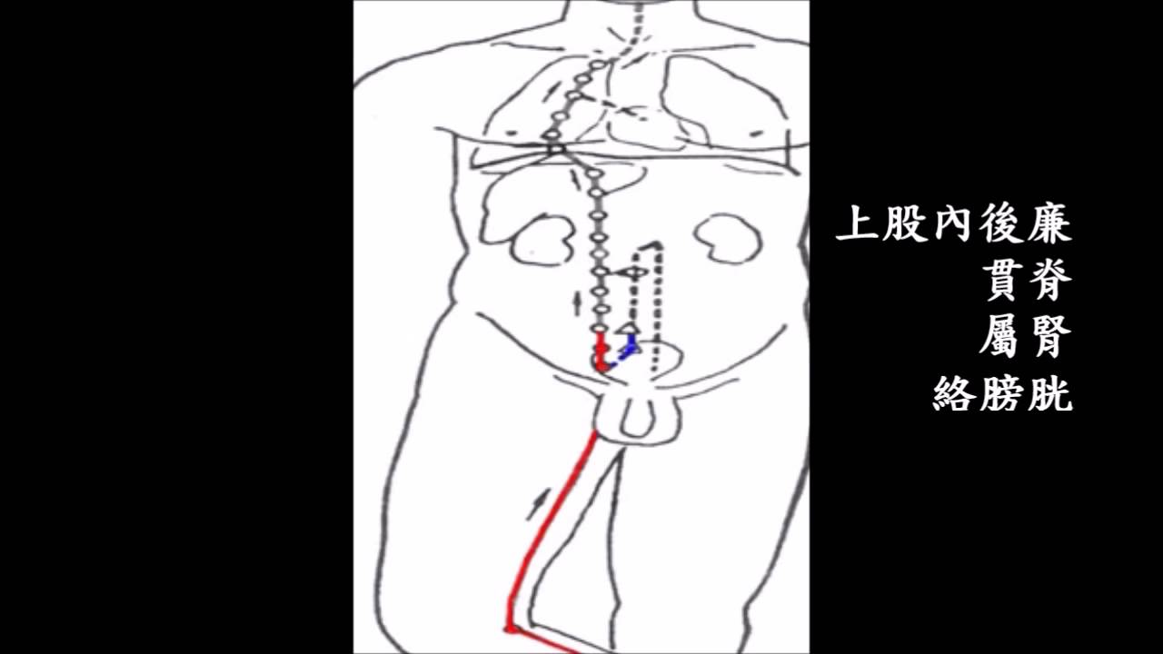 足少陰腎經 - YouTube