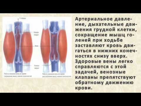 бабушкин рецепт от паразитов