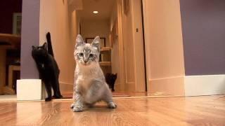 Tippy.mov @ Meow Cat Rescue Kirkland WA 425 822 6369