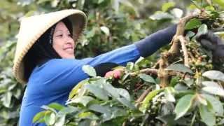 Aroma of Heaven, Indonesian Java Coffee Beans