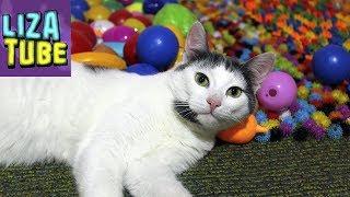 Новая полоса препятствий Колючки, много игрушек, Бакуганы Лиза и три кота Смешное видео 🌸 LizaTube