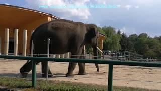ZOO Chorzów 2018 - wycieczka po zoo