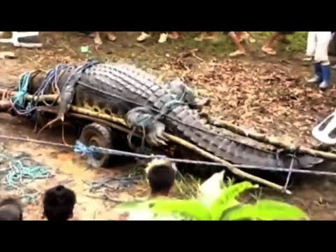 5 Biggest Crocodiles In The World!