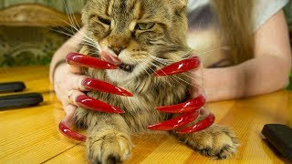 ASMR FOR SLEEP EAR TO EAR SOUNDS NAILS TAPPING CAT ASMR