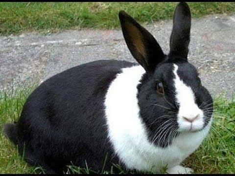 Срок беременности кролика зимой