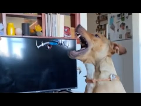 Dog chomps down on quad copter in epic slow motion