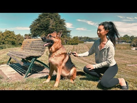 Day in the Life of a German Shepherd - Timaru Road Trip [Part 2]