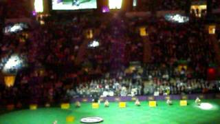 Westminster Kennel Club DOG SHOW - Best in Show start