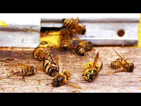 EPA Finally Discovers What's Killing The Bees