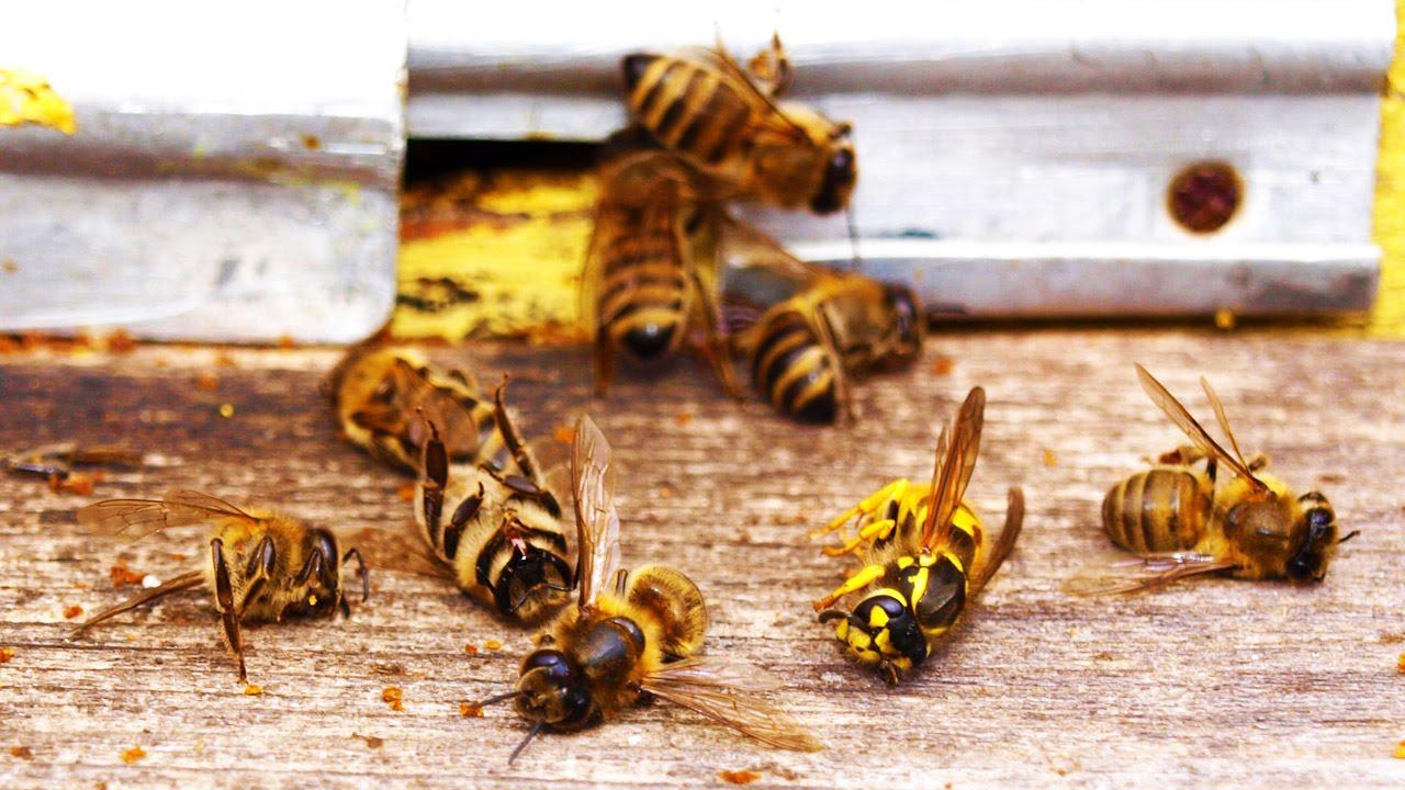 Sejumlah Spesies Serangga Tercancam Punah dalam Beberapa Dekade Mendatang