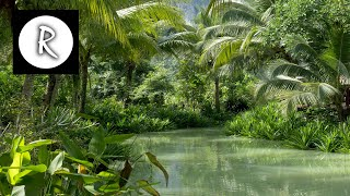 9 HOURS Rainforest │ Jungle Sounds - Natural sound of a rainforest for relaxation, yoga, SPA